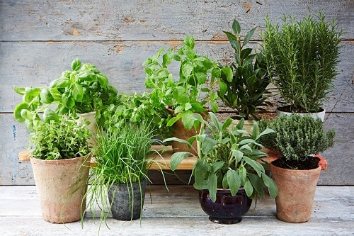 Practical Tips for Starting a Balcony Herb Garden 2