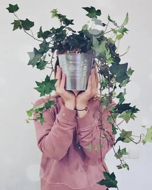 Types of Ivy Houseplants 6