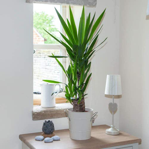 Houseplants that Grow In Dry Air 2