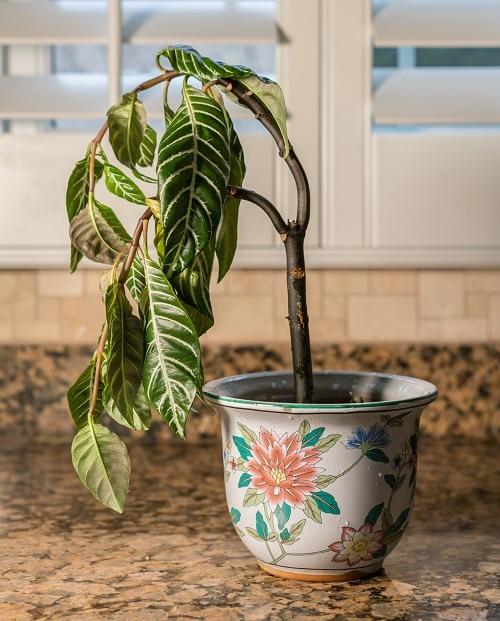 Houseplant Watering Rules 4