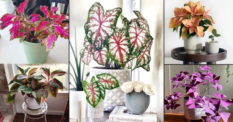 45 Houseplants Full of Colors | Colorful Indoor Plant Pictures