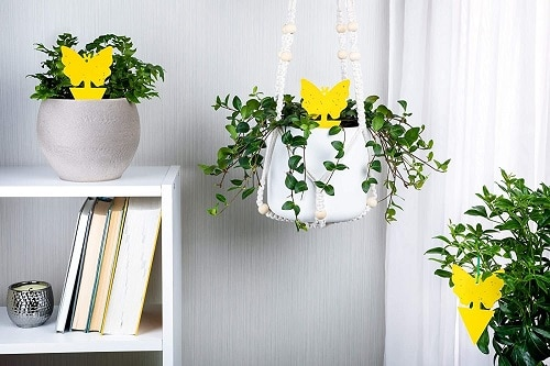 Things that'll Solve All Your Houseplant Problems