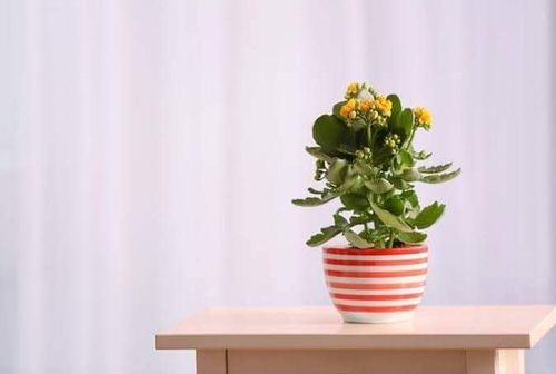 Pictures of the Best Small and Compact Houseplants 7