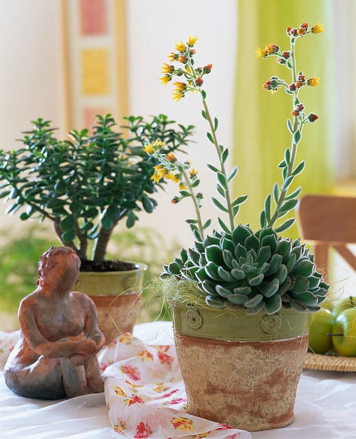 Pictures of the Best Small and Compact Houseplants 8
