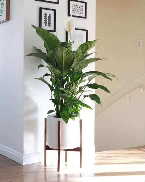Houseplants that Look Best on Plant Stands 8