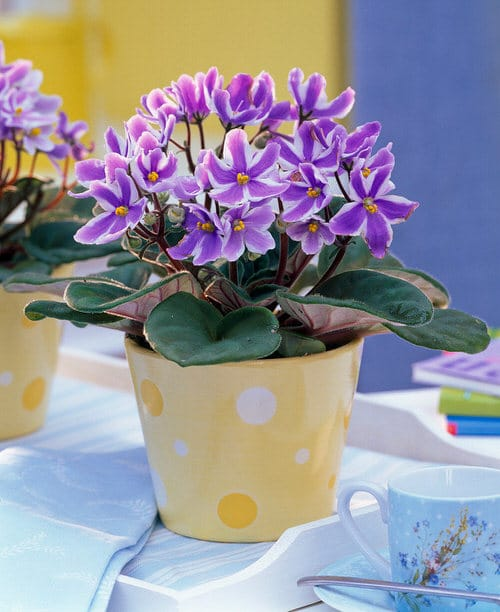 Pictures of the Best Small and Compact Houseplants 11