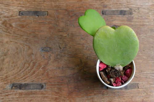 Pictures of the Best Small Houseplants 28