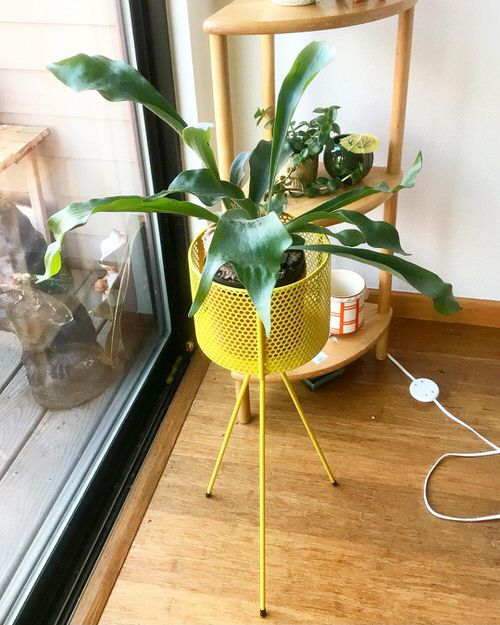 Pictures of the Best Small Houseplants 31