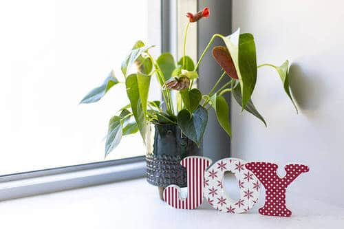 Pictures of the Best Small and Compact Houseplants 2