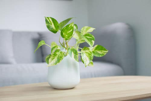Pictures of the Best Small Houseplants 56