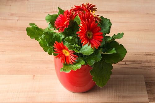 Pictures of the Best Small Houseplants 57