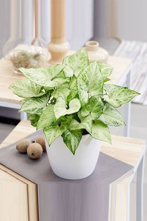 Pictures of the Best Small Houseplants 59