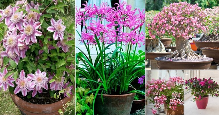 List of 79 Types of Pink Flower Plant Names | Best Pink Flowers