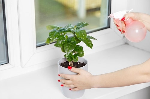 Things that'll Solve All Your Houseplant Problems 3