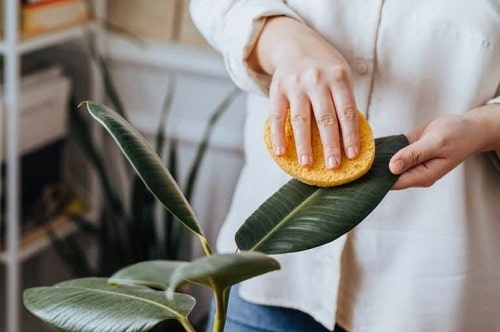 Things that'll Solve All Your Houseplant Problems 2