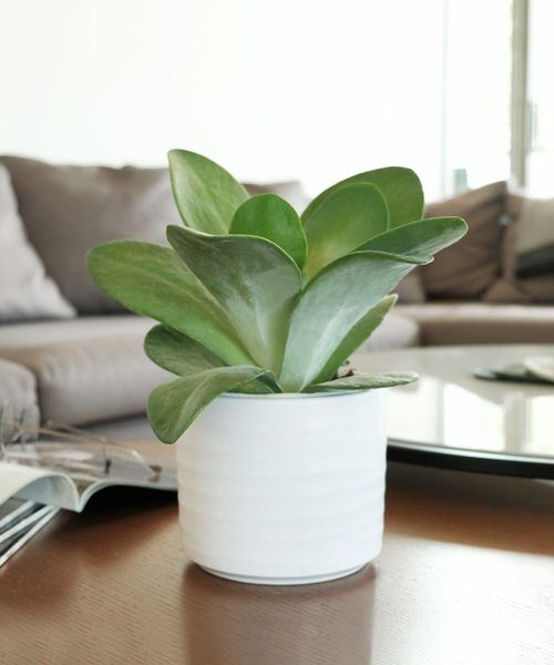 Pictures of the Best Small Houseplants 60