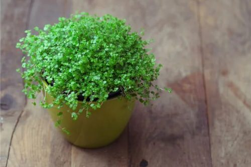 Pictures of the Best Small Houseplants 61