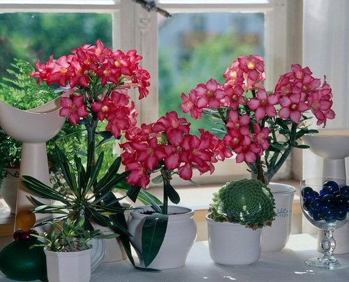 Pictures of the Best Small Houseplants 62
