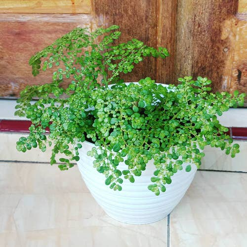 Pictures of the Best Small Houseplants 63