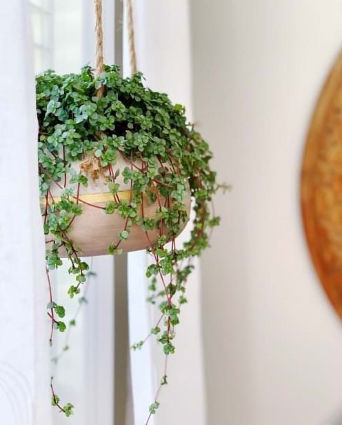 Pictures of the Best Small Houseplants 64