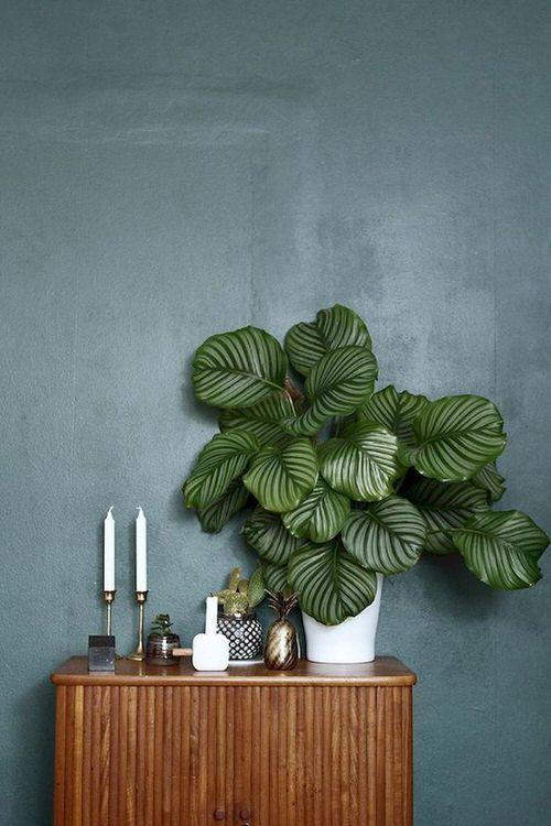Houseplants that Look-Like Fiddle Leaf Fig 4
